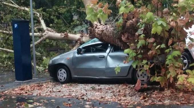 Un'auto rimasta sotto a un albero caduto in piazza San Domenico a Faenza