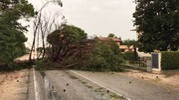 I danni causati dal maltempo che si è scatenato  tra l'isola di Albarella e il litorale polesano (foto Moretto)