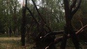 I danni causati dal violento maltempo (foto Moretto)