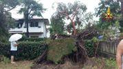 Gli alberi caduti hanno causato ingenti danni