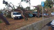 Alberi sulle auto parcheggiate (foto Moretto)