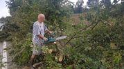 E' urgente rimuovere i tronchi che bloccano le strade (foto Donzelli)