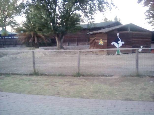 Il recinto vuoto degli emu