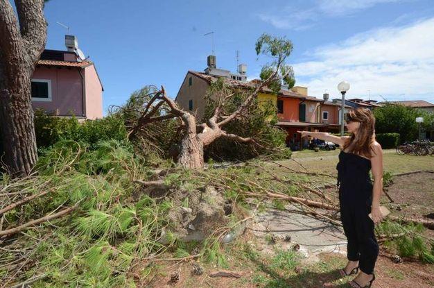 Ad Albarella gli alberi di grandi dimensioni sono in buona parte stati abbattuti (foto Donzelli)