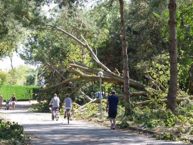 Gli alberi caduti in strada (foto Donzelli)