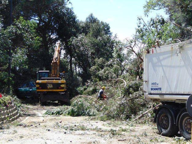 I danni al giardino botanico di Porto Caleri a Rosolina (foto Barbara Braghin)