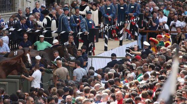 Palio di Siena del 16 agosto 2017: l'assegnazione (foto Di Pietro)
