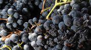Festa dell'Uva e dell'Agricoltura Bergamasca