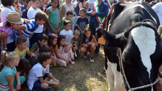 Giovanissimi e il sindaco vicino a un capo di bestiame (Gazzola)