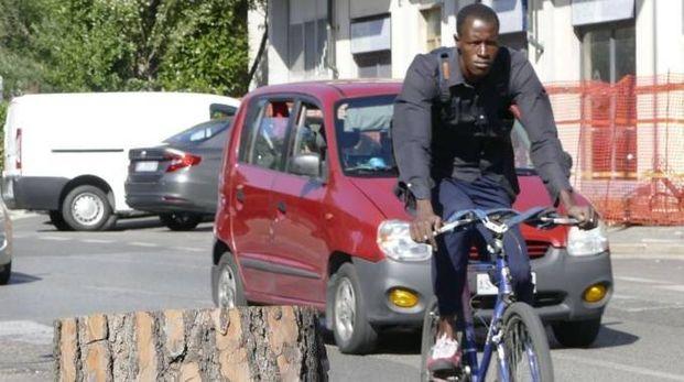 Alberi tagliati in via Roma: 70 gli esemplari ritenuti pericolosi dal Comune Foto Attalmi
