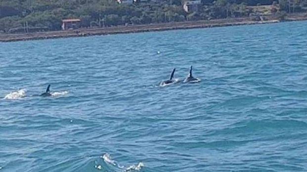 I cinque delfini fotografati