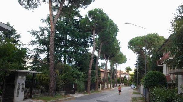 Via Salvo D'Acquisto a Castrocaro