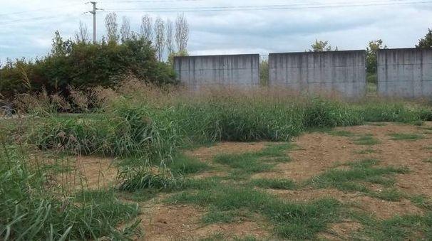 Erbacce e gramigna nei terreni del cimitero