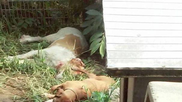 Le carcasse dei cani