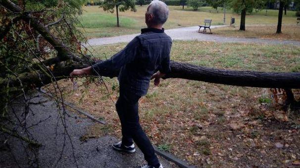 Il grosso albero che è crollato nel parco Aldo Moro di Altopascio