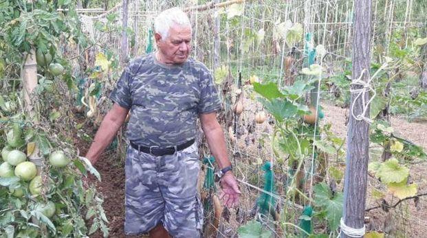 Giorgio Rossi mostra parte dell'orto distrutto dai cinghiali