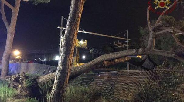 L'albero caduto sui binari