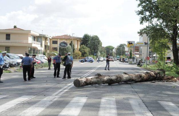 L'albero caduto su un'auto (Alcide)