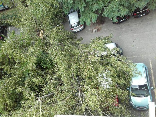 L'albero ha ceduto di schianto abbattendosi sulle auto parcheggiate (foto Schicchi)