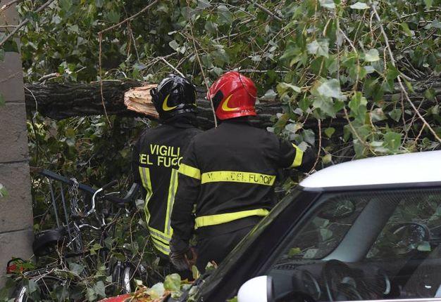 Il pioppo ha colpito le auto parcheggiate in via Garavaglia  (foto Schicchi)