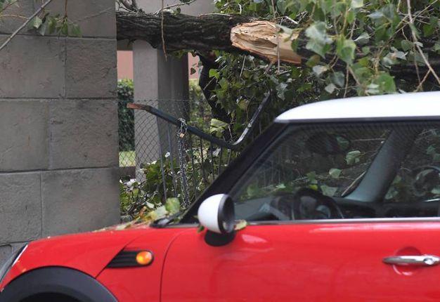 L'albero caduto di fronte al Copernico (foto Schicchi)