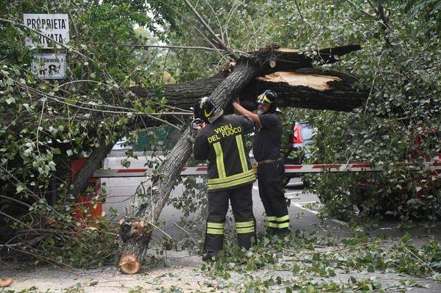 La squadra dei vigili del fuoco al lavoro (foto Schicchi)