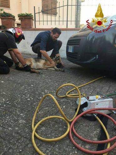 Il cane lupo salvato dai vigili del fuoco
