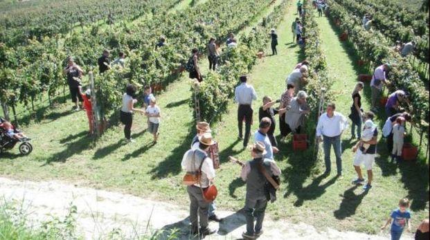 Libri & viticoltura: il Premio Nobel va a un italiano
