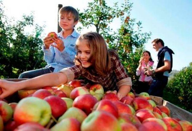 La mela è un'immancabile presenza nelle sagre autunnali