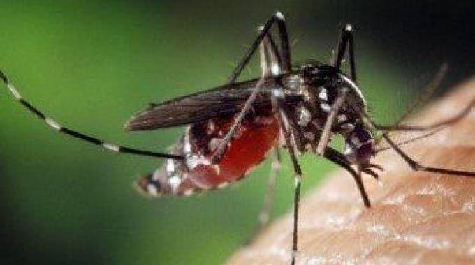 Una zanzara