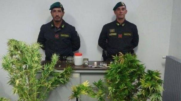 Le piante di marijuana e le sostanze dopanti sequestrate