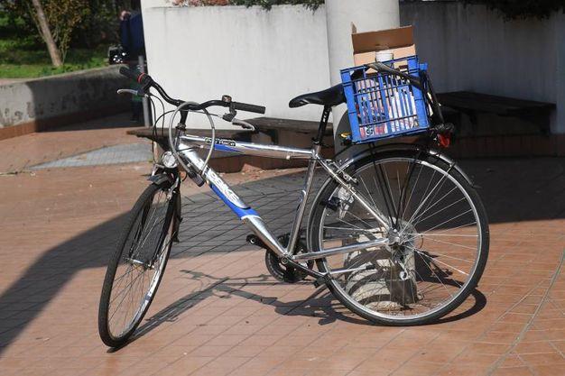 La bici dell'egiziano (Schicchi)