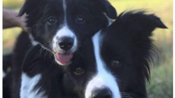 Cani in pericolo