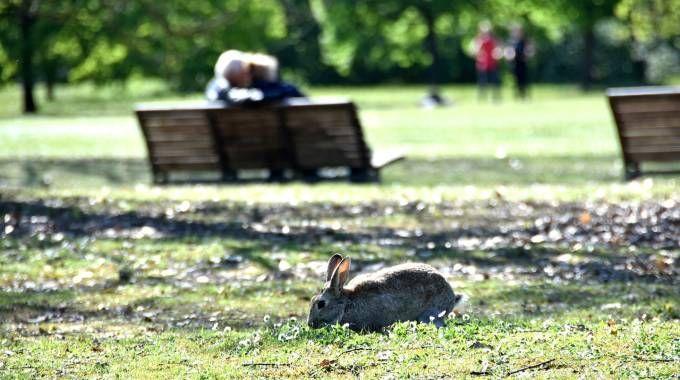 Un coniglio al parco urbano di Forlì (foto Fantini)