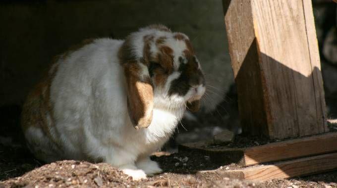 Coniglio in una foto L.Gallitto