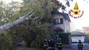 L'albero caduto su una casa in via Bellini