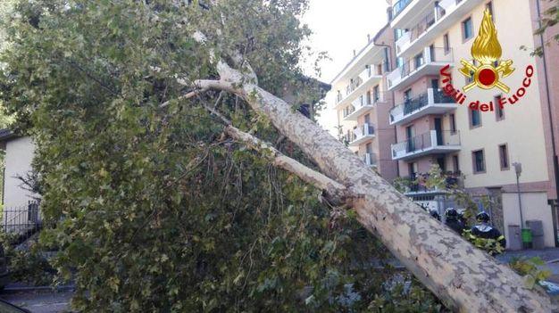 L'albero caduto su un'auto in via Bellini