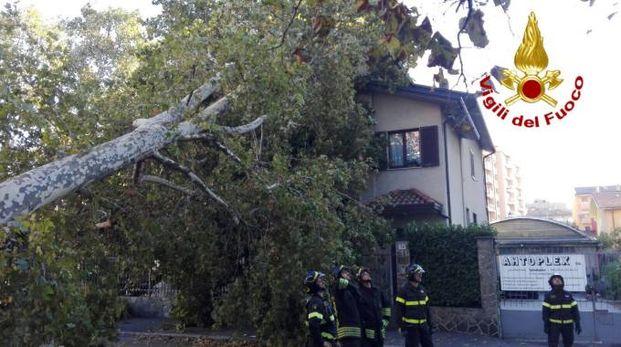 L'albero caduto su un'abitazione