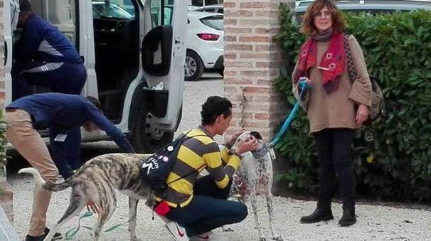Risultati immagini per levrieri spagnoli maltrattati