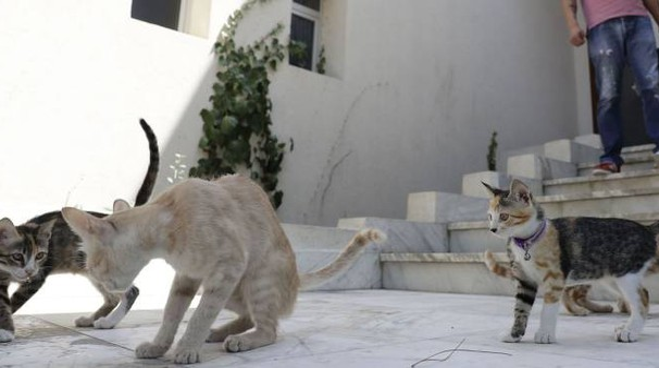GATTINO UCCISO A Lido Adriano denunciato il padrone di un cane meticcio