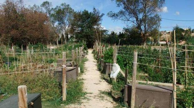 Gli orti sociali nella zona di Chiarino
