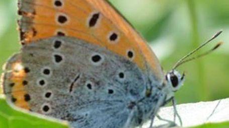 Una farfalla del Parco del Ticino (Studiosally)
