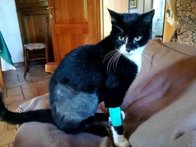 Il gattino Yoghi impallinato (Scardovi)