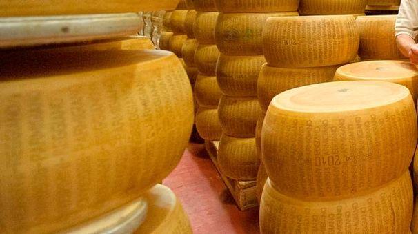 Una foto generica  di forme di Parmigiano