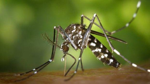 Zanzara (foto Dire)