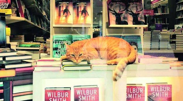 Lo troviamo ovunque: sui libri e sulle bancarelle del mercato. E' amato da tutti i rodigini