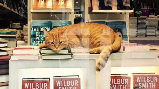 Il gatto Rossini in libreria