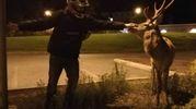 Un giovane accarezza il cervo spuntato di notte nel parcheggio  di Villa Fiorita