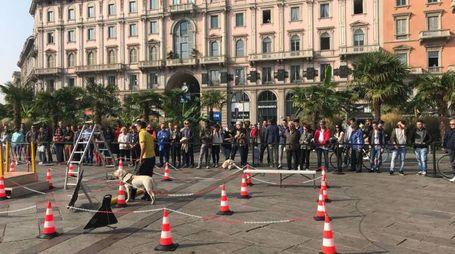 Giornata nazionale dei cani gudia (Newpress)