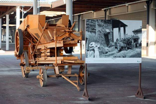 Oltre quaranta attrezzi storici provenienti dal Museo della Civiltà Contadina di Bentivoglio (foto Schicchi)